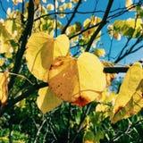 liść jesień Fotografia Royalty Free