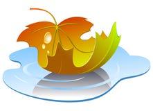 liść kałuży wektor Zdjęcie Stock