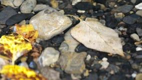 Liść Kiwa w Wodnym wideo zdjęcie wideo