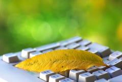 liść klawiaturowy kolor żółty Obrazy Royalty Free