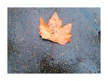 Liść klonowy, deszcze, ulica, Zurich Obrazy Royalty Free