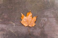 Liść klonowy na ławce Fotografia Stock
