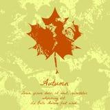 Liść klonowy z atramentu wzorem dla jesień projekta Fotografia Royalty Free