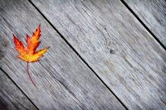 liść klonu czerwień Fotografia Royalty Free
