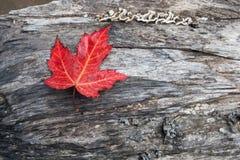 liść klonu czerwień Fotografia Stock