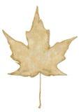 liść klonu rocznik Obraz Royalty Free
