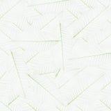 liść kościec Obrazy Royalty Free