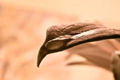 liść kropelkowa woda Obraz Royalty Free
