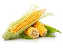liść kukurydzany świeży zielony warzywo zdjęcia royalty free