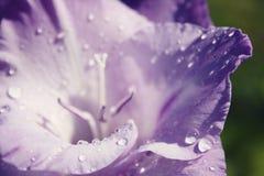 Liść kwiat z kroplami Obrazy Royalty Free