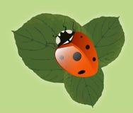 liść ladybird ilustracyjny Zdjęcie Royalty Free