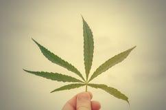 Liść marihuana przy zmierzchem Fotografia Stock