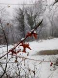 Liść mgły drzewna śnieżna halna zima Obrazy Royalty Free