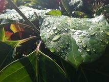 liść mokre Fotografia Stock