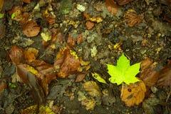 liść mokre Zdjęcia Stock