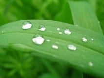 liść mokre Zdjęcie Stock