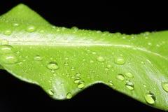 liść mokry Obrazy Stock