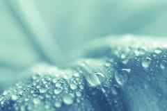 liść mokry Zdjęcie Stock