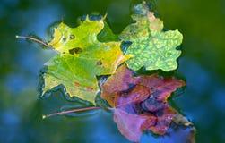 liść mokrzy Fotografia Stock
