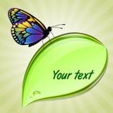 liść motyli obsiadanie Obrazy Stock