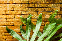 Liść na ściana z cegieł Fotografia Stock