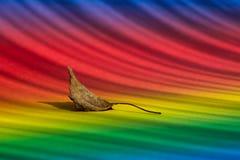 Liść na barwionym tle Zdjęcia Stock