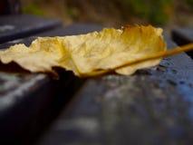 Liść na drewnianej ławce Zdjęcie Royalty Free