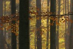 Liść na gałąź w jesień lesie Fotografia Stock