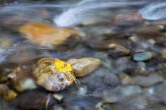 Liść na kamieniu w zatoczce Obrazy Stock