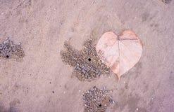 liść na plaży Zdjęcie Royalty Free