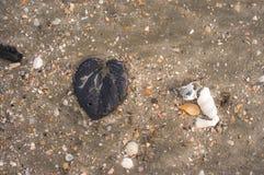 liść na plaży Zdjęcia Royalty Free