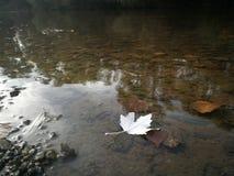 Liść na rzece, jesień 2018 obraz stock