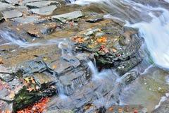 Liść na skałach Fotografia Stock
