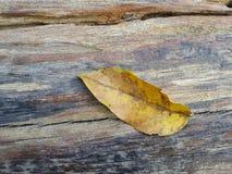 Liść na starej drewnianej deski teksturze Fotografia Royalty Free