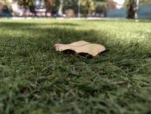 Liść na trawie w letnich dniach niezr?wnowa?enie obraz stock