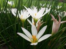 Liść, natura, tapeta, kwiat, Obraz Stock