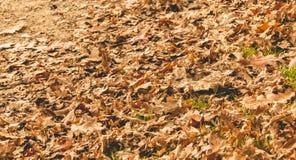 Liść nieżywy w jesieni na drodze gruntowej Zdjęcie Royalty Free