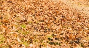 Liść nieżywy w jesieni na drodze gruntowej Fotografia Stock