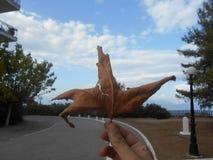 liść nie żyje zdjęcie royalty free