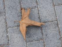 liść nie żyje obrazy stock