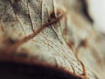 liść nie żyje Obraz Royalty Free