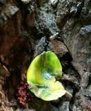 liść nie żyje Fotografia Royalty Free
