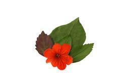 Liść odizolowywa, tekstura zielony liść Zdjęcie Stock
