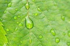 liść opadowa zielona woda obraz royalty free