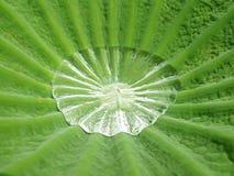 liść opadowa zielona woda Obrazy Stock
