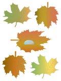 liść opadowy klon Obrazy Royalty Free