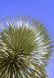 Liść ornamentacyjna roślina Obraz Royalty Free