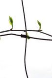 liść płotu zdjęcia stock