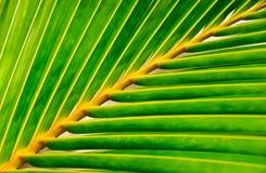 liść palma żyje Obraz Royalty Free