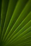 liść palma Fotografia Royalty Free